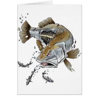 Barramundi Card