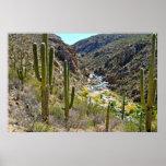 Barranco del desierto póster