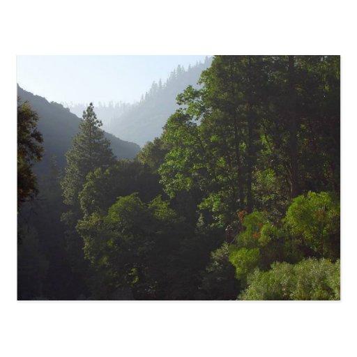 Barrancos Pinetrees de los valles de los ríos Postales