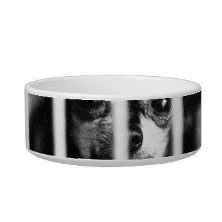 barras detrás blancos y negros de la jaula de la c tazón para gato