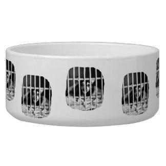 barras detrás blancos y negros de la jaula de la c tazon para perro