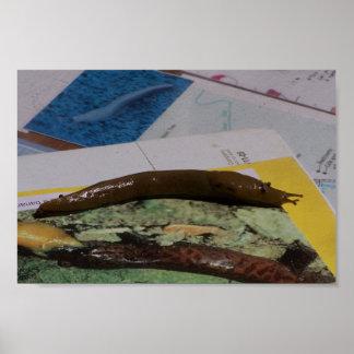 Barras sucias del plátano en los libros posters