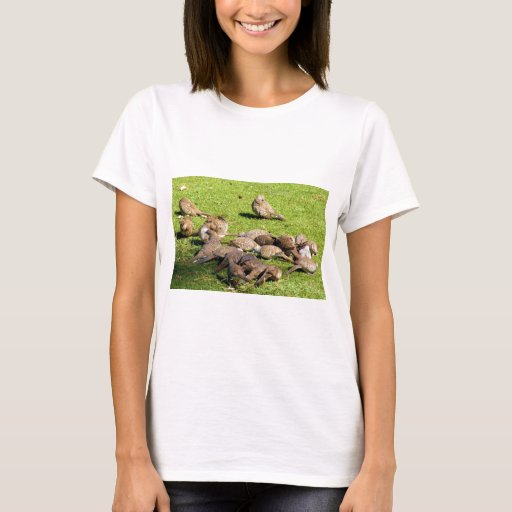Barred Doves in the Grass in Hawaii T-Shirt