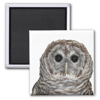Barred Owl 2 Inch Square Magnet