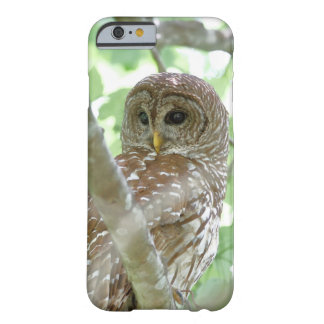 Barred Owl Apple iPhone 6 Case