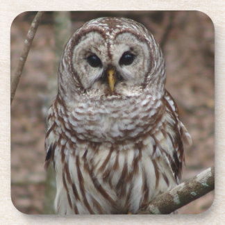 Barred Owl Beverage Coaster