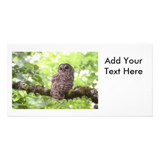 Barred Owl Card