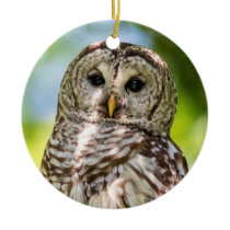 Barred Owl Ceramic Ornament