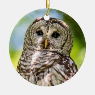 Barred Owl Ceramic Ornament