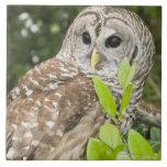 Barred Owl Ceramic Tile