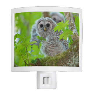 Barred Owl chicks night light