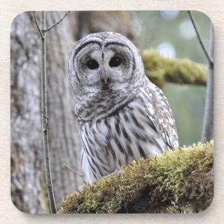 Barred Owl Coaster