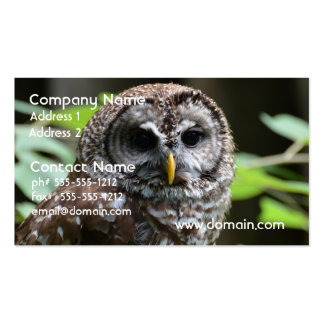 Barred Owl Double-Sided Standard Business Cards (Pack Of 100)