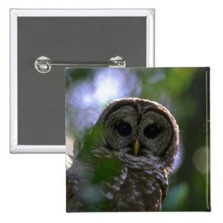 Barred owl, Everglades, Florida Pin