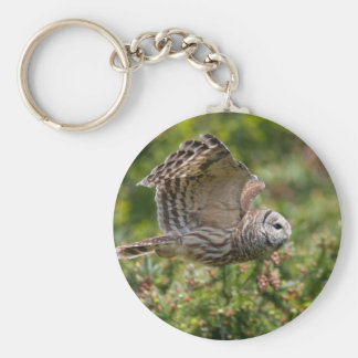 Barred Owl Flying past Key Chains