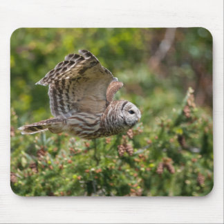 Barred Owl Flying past Mouse Pad