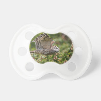 Barred Owl Flying past Pacifier