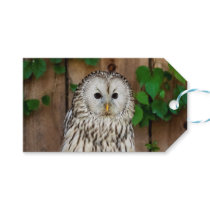 Barred Owl Gift Tags