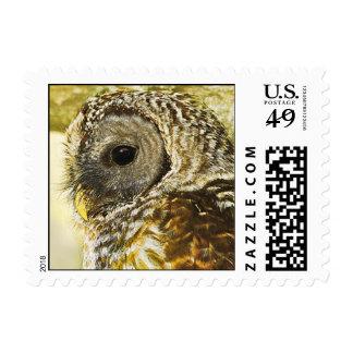 Barred Owl Illustration Effect Postage Stamps