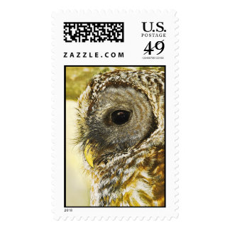 Barred Owl Illustration Postage