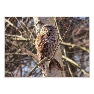 Barred Owl in a Birch Tree Photo Card