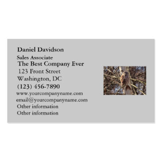 Barred Owl in a Birch Tree Photo Double-Sided Standard Business Cards (Pack Of 100)