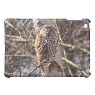 Barred Owl in a Birch Tree Photo iPad Mini Covers