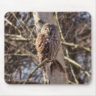Barred Owl in a Birch Tree Photo Mouse Pad