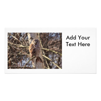 Barred Owl in a Birch Tree Photo Personalized Photo Card