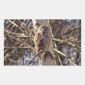 Barred Owl in a Birch Tree Photo Rectangular Sticker
