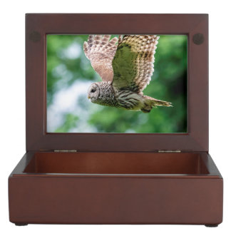 Barred Owl in flight Memory Box