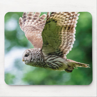 Barred Owl in flight Mouse Pad