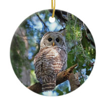 Barred Owl in the Forest Ceramic Ornament