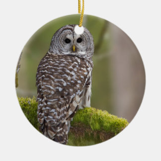 Barred Owl in the old growth Ceramic Ornament