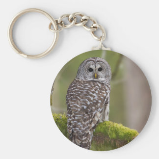 Barred Owl in the old growth Keychain