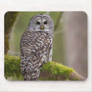 Barred Owl in the old growth Mouse Pad