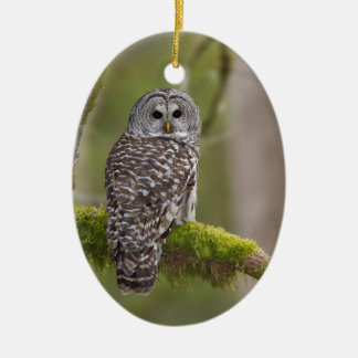 Barred Owl in the old growth Christmas Tree Ornaments