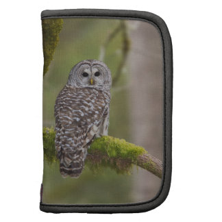 Barred Owl in the old growth Folio Planners