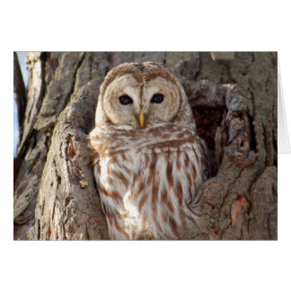 Barred Owl in Tree Nest Card