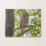 Barred Owl Jigsaw Puzzles