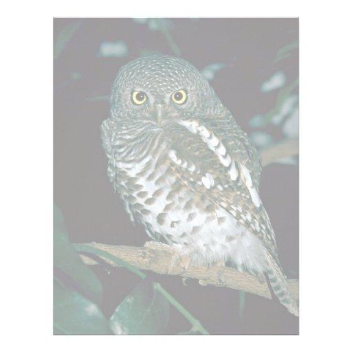 Barred Owl Letterhead