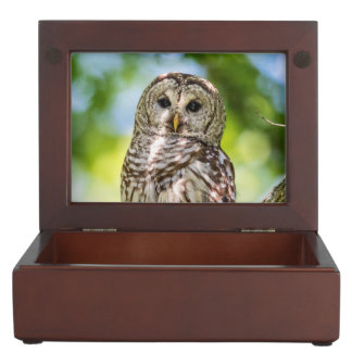 Barred Owl Memory Box