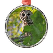 Barred Owl Metal Ornament