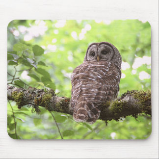Barred Owl Mouse Pad