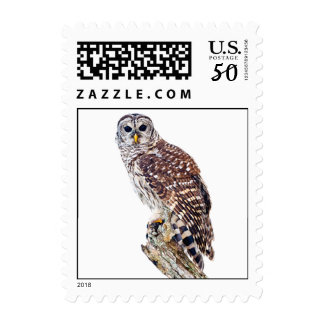 Barred Owl on White Postage