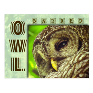 Barred Owl or Hoot Owl Postcard