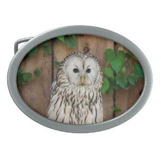 Barred Owl Oval Belt Buckle