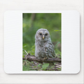 Barred Owl owlet Mouse Pad