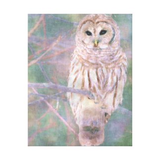 Barred Owl Pastel Oilpainting Canvas Print