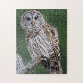 Barred Owl Perchinging Wildlife Puzzle